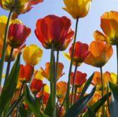 33'000 Unfälle jährlich im Garten und Haushalt