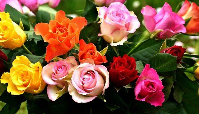 Blumen Bleiben Mit Zucker Und Wodka Langer Frisch Putzfrau 24
